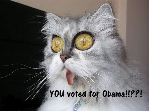 not obama.jpg