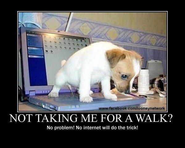 dogpissingoncomputer.jpg