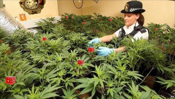 Cannabis-UK.jpg