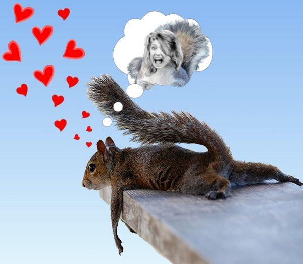 Day Dreaming squirrel 2.jpg