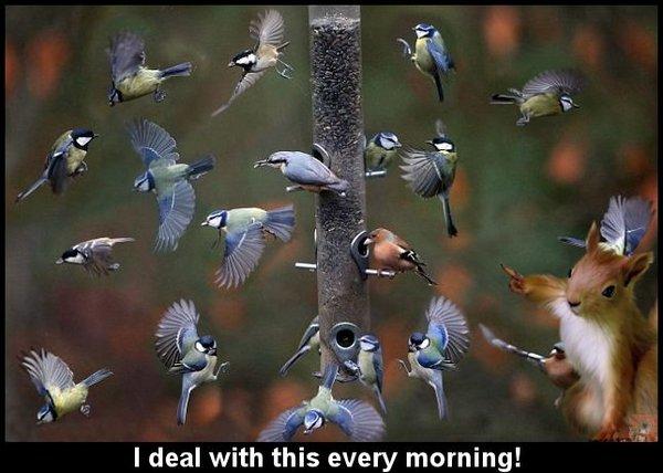 Breakfast rush.jpg