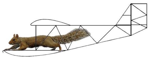 Squirrel Glider.jpg