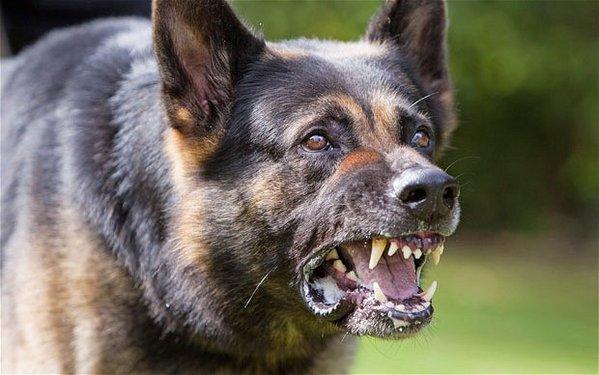 dangerous-dog_2113544b.jpg