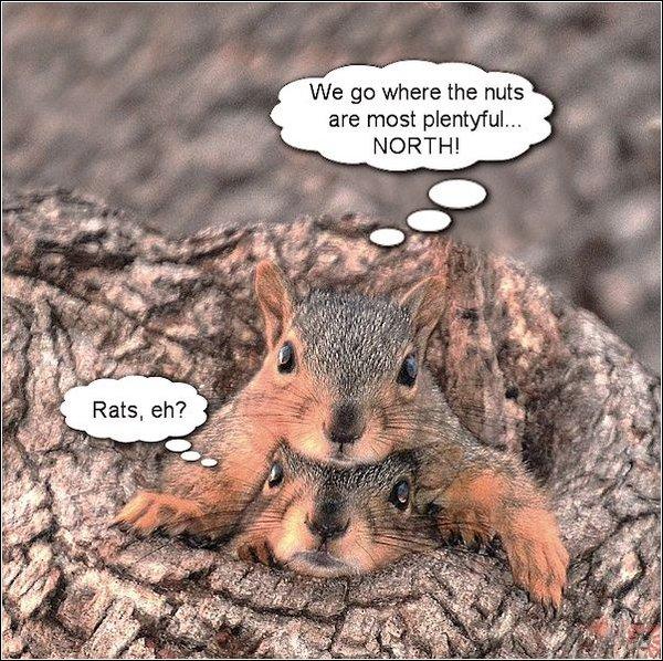 Brother-Squirrels-2.jpg