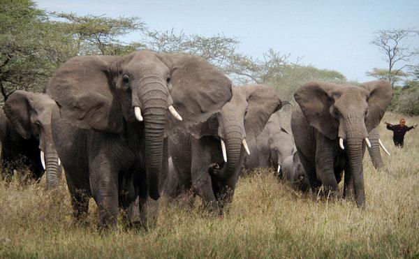 Elephant-Herd2.jpg