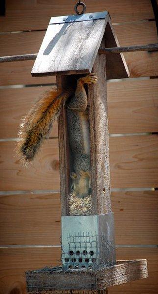 Squirrel Looter.jpg