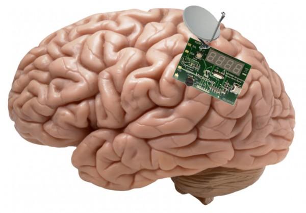 Brain Transplant Peoples Cube.jpeg