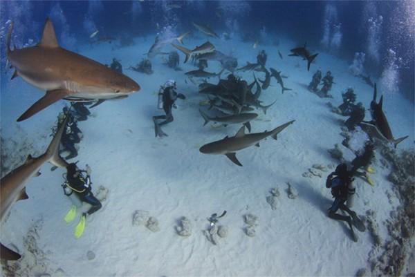 Shark Feed.jpg