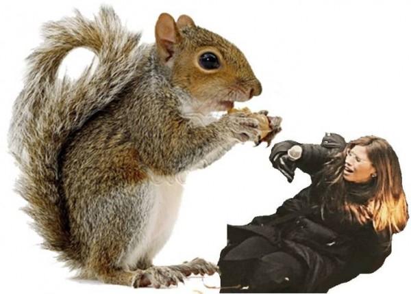 attacking squirrel.jpg