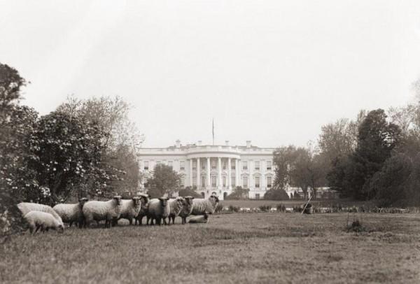 White House with Sheep.jpg