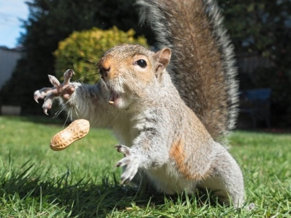 squirrel.nut.(600).jpg