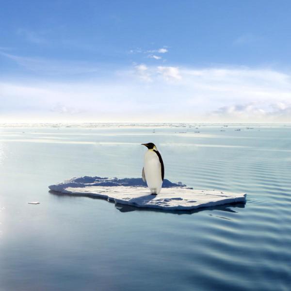 Penguin Ice Floe.jpg