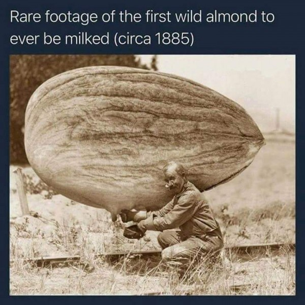 Almond Milking.jpg