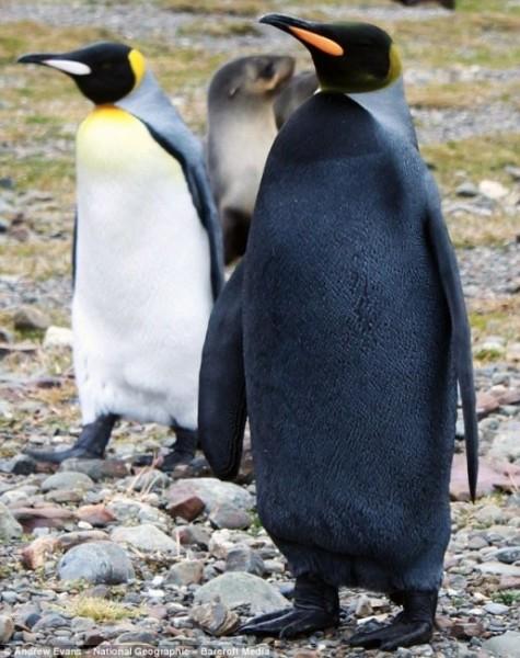 Penguin - Black.jpg