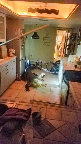 Alligator_Kitchen.jpg