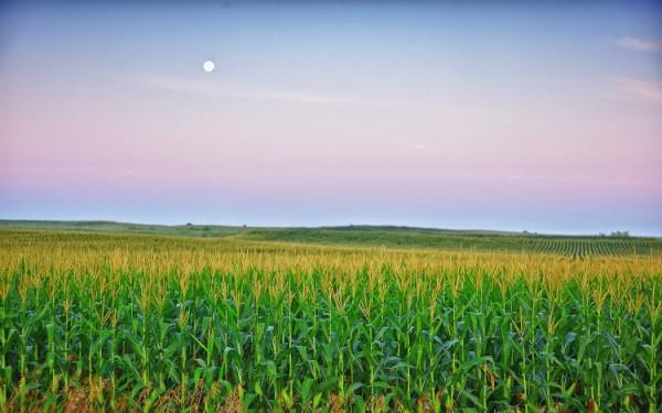 Iowa Corn field.jpg