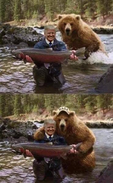 bear trump salmon.jpeg
